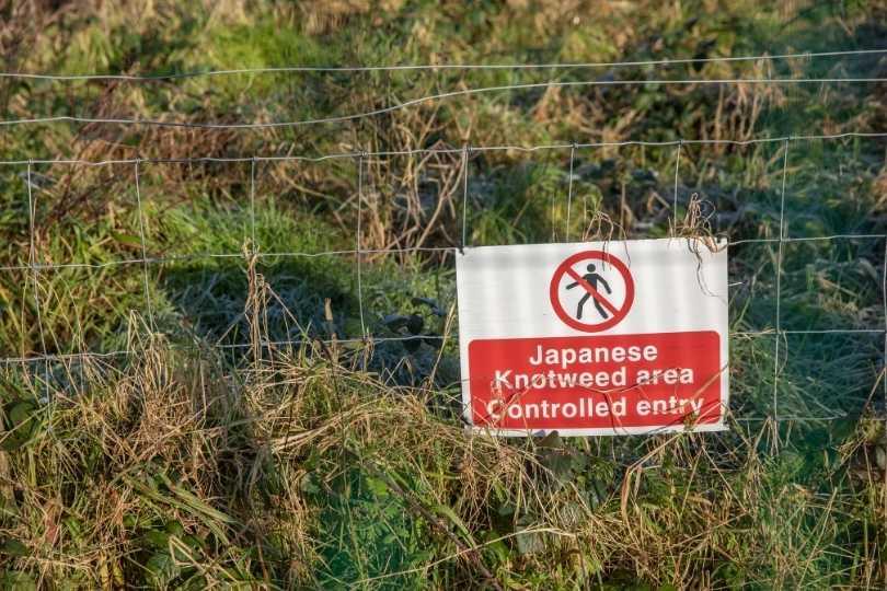 Prédire les réponses des plantes indigènes à l'invasion des nœuds japonais