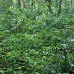 La taille et les besoins en lumière des plantes peuvent déterminer l'avenir de toute une forêt