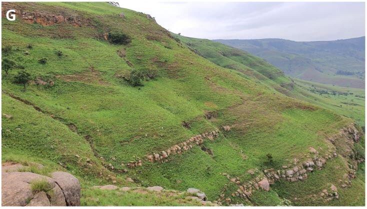 Vue sur les prairies de la ceinture des brumes du nord du Zoulouland où Ceropegia heidukiae a été trouvé.