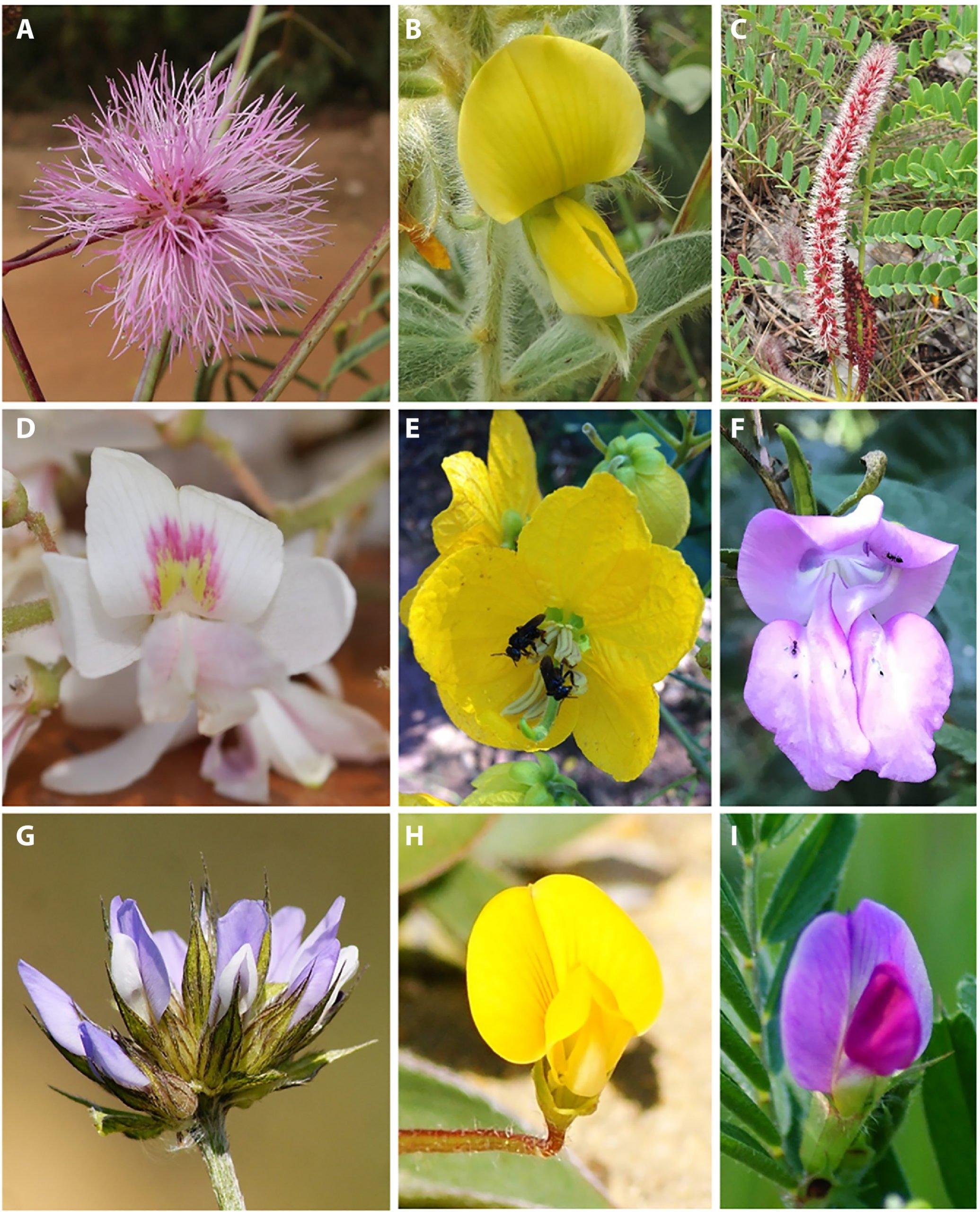 La couleur de la végétation de fond révèle comment les abeilles voient les fleurs