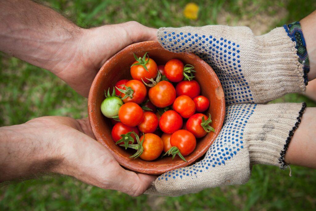 Jardiner pour adopter un mode de vie plus sain  Jardin botanique national du Pays de Galles