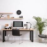 5 bonnes raisons d'avoir des plantes vertes au bureau