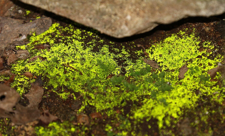Goblin Gold: A Luminous Moss Story - En défense des plantes