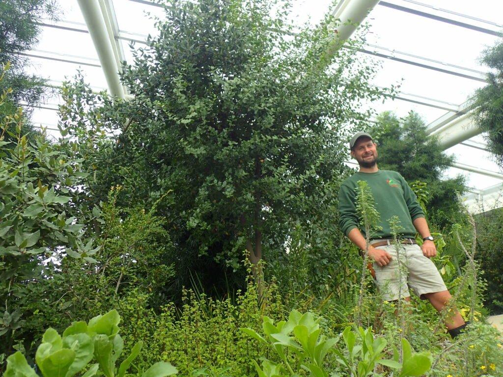 Grandes espèces d'arbres à effet de serre utilisées pour créer le vaccin Covid-19  Jardin botanique national du Pays de Galles