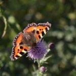 Papillons en hiver  Jardin botanique national du Pays de Galles
